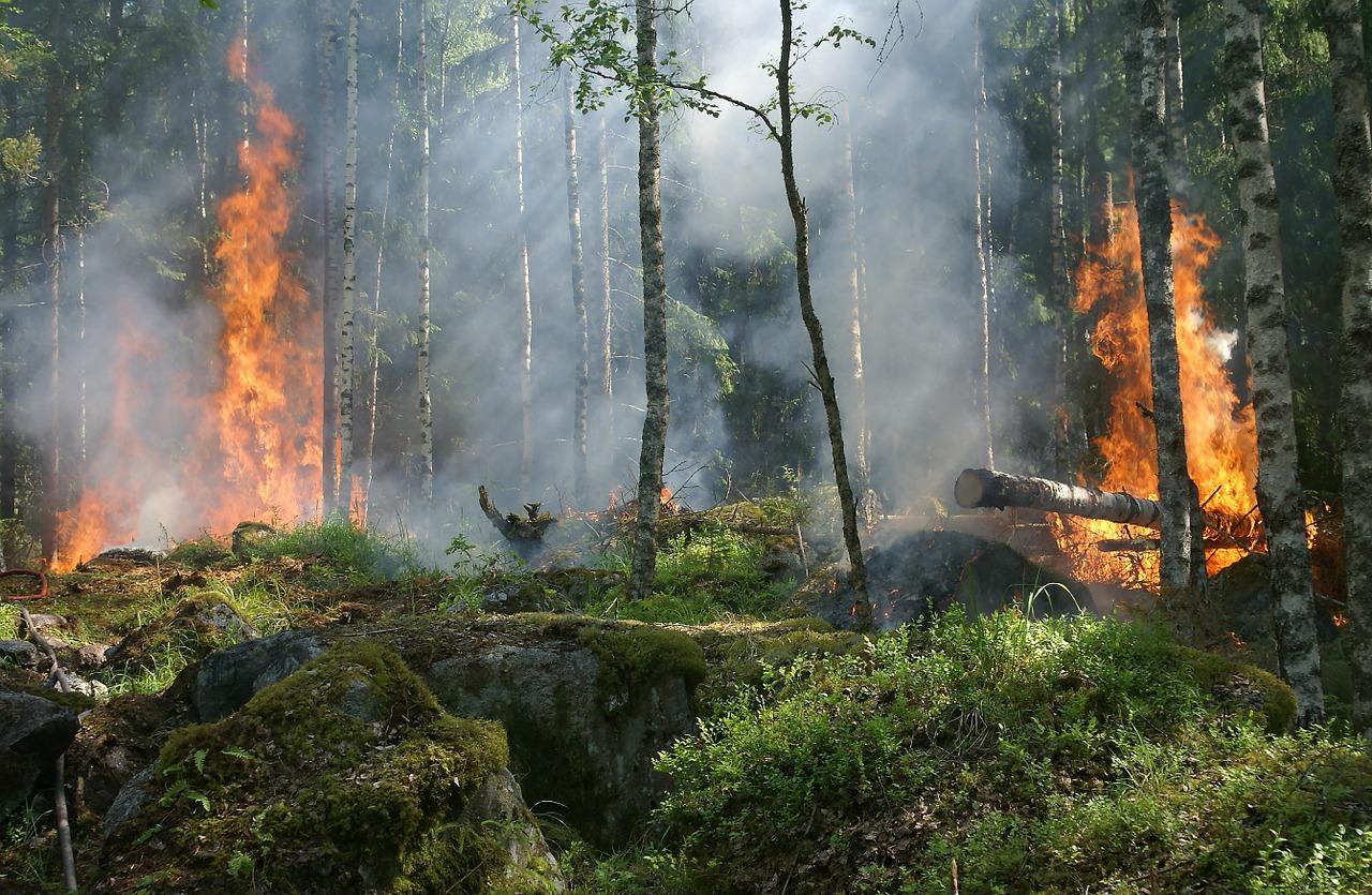 forest fire closeup