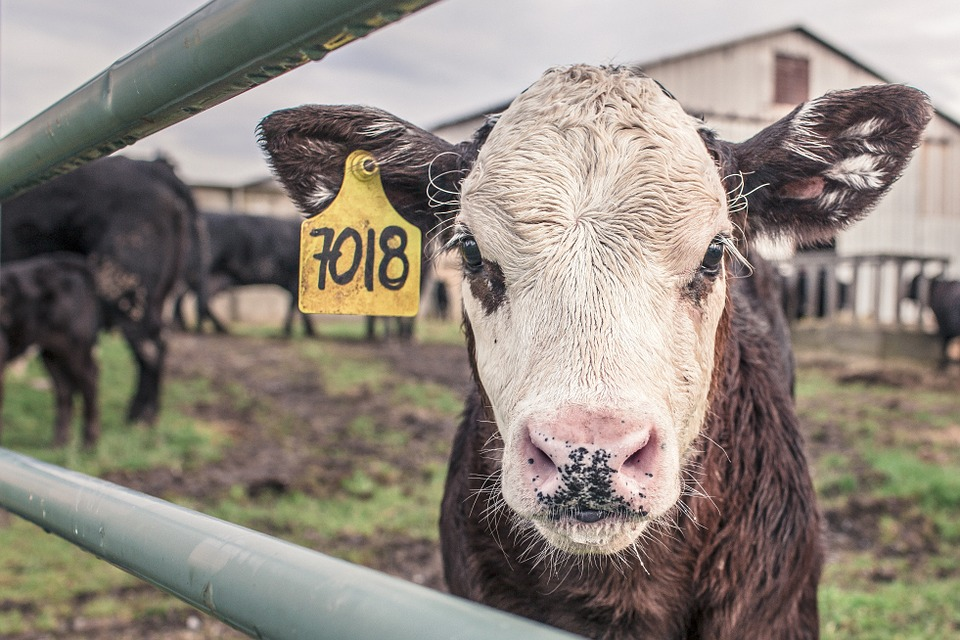 Could we be witnessing the beginning of a farming crisis?