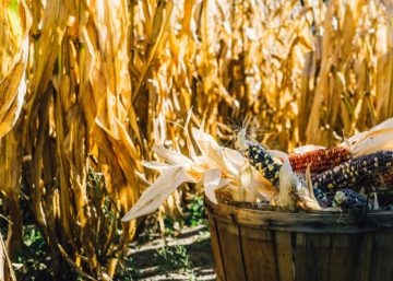 Mexico is the largest buyer of US corn.